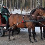 02.wagonetka mała - skansen w Sierpcu
