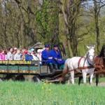 08.wagonetka - skansen w Sierpcu