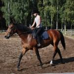 06.Szkółka jeździecka