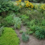 zioła w ogrodzie skansen Sierpc