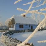 Zima, wiklinowy płot, wiejska chałupa, oszronione drzewa - Muzeum Wsi Mazowieckiej w Sierpcu