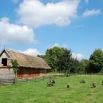 Łąka przy zagrodzie z Jonnego, zwierzęta gospodarskie - lato w Muzeum Wsi Mazowieckiej w Sierpcu