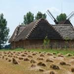 Żniwa w Muzeum Wsi Mazowieckiej w Sierpcu, widok na stodołę w zagrodzie z Rębowa