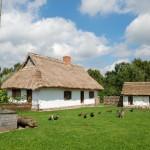 Podwórze zagrody z Rębowa, chałupa i zwierzęta - lato w Muzeum Wsi Mazowieckiej w Sierpcu