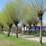 Wiejska droga, wierzby, zagroda z Czermna - wiosna w Muzeum Wsi Mazowieckiej w Sierpcu