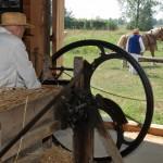 Żniwa 2014, skansen w Sierpcu - stodoła, pracuje sieczkarnia napędzana kieratem, w tle koń napędzający kierat