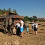 Żniwa 2014, skansen w Sierpcu - zwiedzający na polu, pracuje młockarnia mechaniczna
