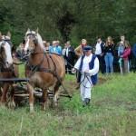 Wykopki 2017, skansen w Sierpcu - w polu pracuje kopaczka konna