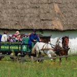 Na młodych odkrywców czekają przejażdżki konne wozem, Fot.D_Krześniak