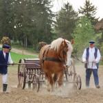 Majówka 2019, dzień drugi, skansen w Sierpcu - na polu, koń ciągnie siewnik