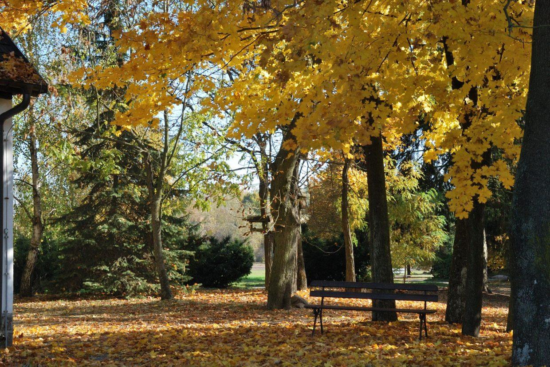 Park dworski jesienią - Skansen w Sierpcu