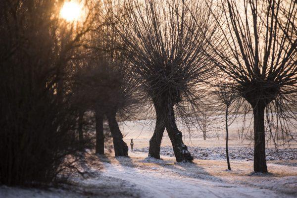Widok na wierzby, zima - Skansen w Sierpcu