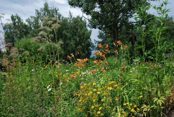 Rośliny w wiejskim ogrodzie - Skansen w Sierpcu