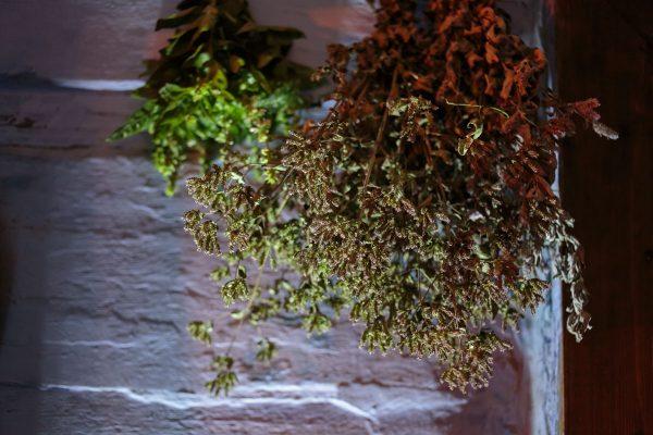 Zbliżenie na zioła - Skansen w Sierpcu