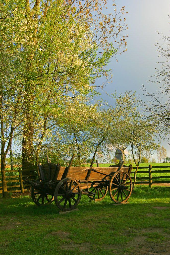 Wiosna, wóz, zielone drzewa, w tle wiatrak - Skansen w Sierpcu