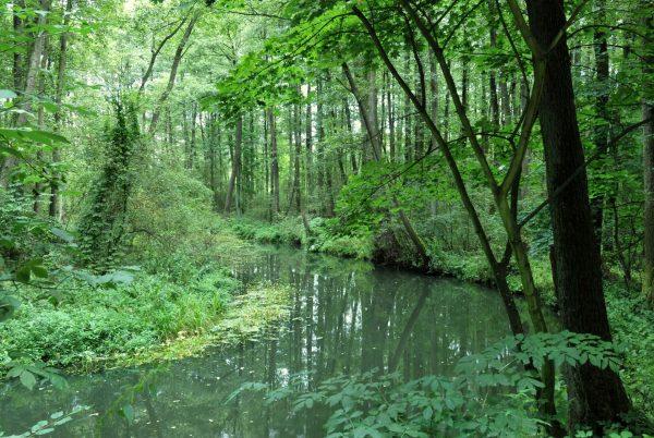 Rzeka przecinająca las - Skansen w Sierpcu