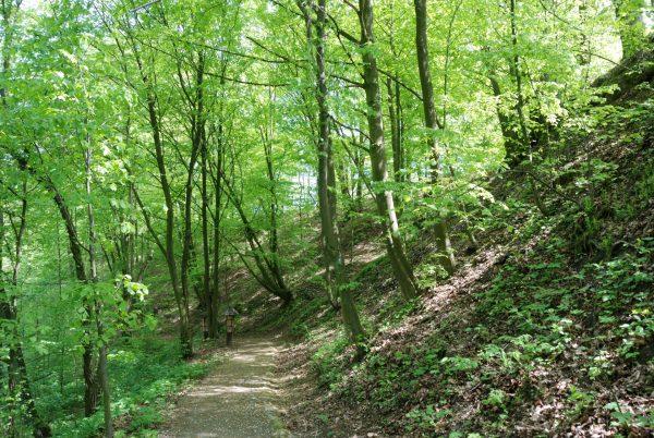 Droga w lesie, wiosna, wkoło drzewa - Skansen w Sierpcu