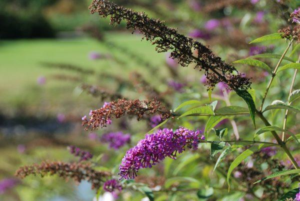 Zbliżenie na kwiaty w parku - Skansen w Sierpcu