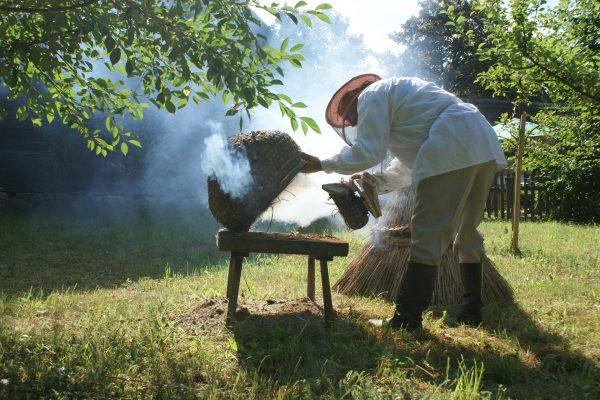 Pszczelarz w pasiece, odymianie ula - Skansen w Sierpcu