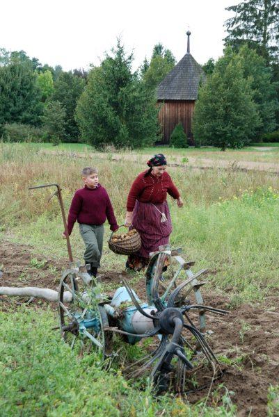 Kopanie ziemniaków, kobieta i chłopiec na polu - Skansen w Sierpcu