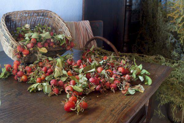 Izba wiejska, na stole dzika róża - Skansen w Sierpcu
