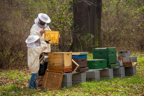 Pszczelarz uczy dziecko pracy w pasiece