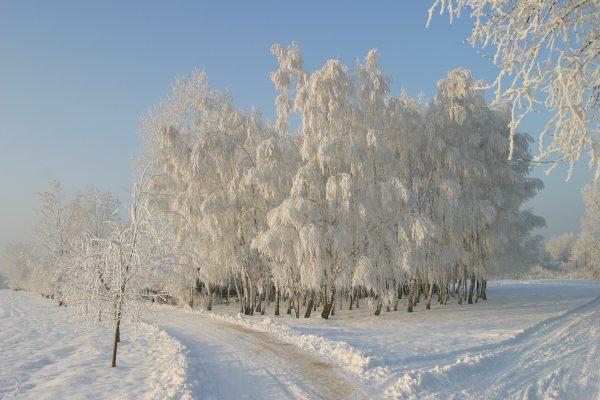 Drzewa w śniegu, wiejska droga - Skansen w Sierpcu