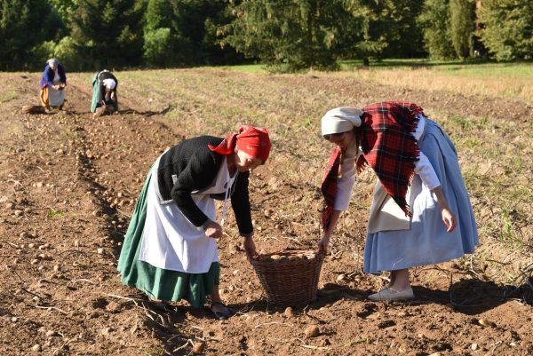 dwie kobiety na pierwszym planie, które kopią ziemniaki na polu, w tle dwie inne osoby