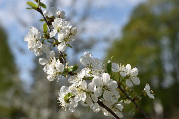 Zbliżenie na wiosenne kwiaty