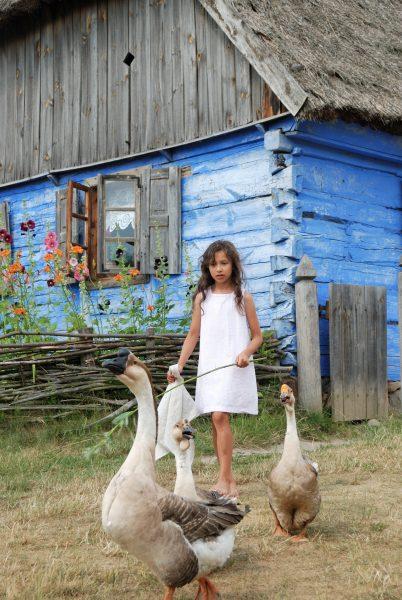 dziewczynka pasie gęsi, w tle chałupa z Czermna, MWM w Sierpcu