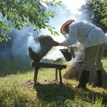 Pszczelarz w stroju pracuje przy ulu ze słomy, MWM Sierpc