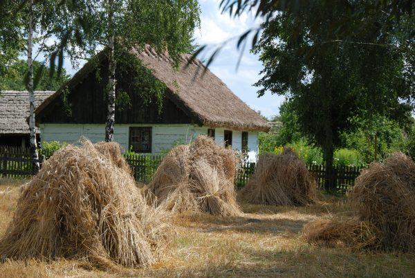 Widok na snopki i chałupę z Ostrowa - skansen w Sierpcu