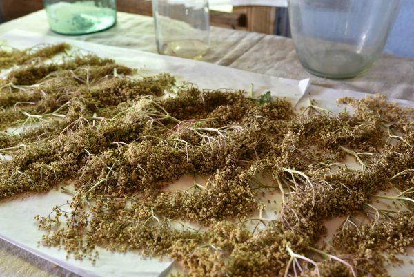 Zbliżenie na zioła, wystawa - skansen w Sierpcu