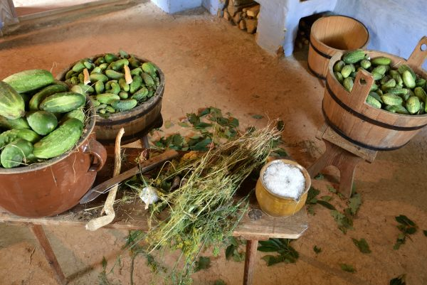 proces układania ogórków - na ławie sól, koper i ogórki