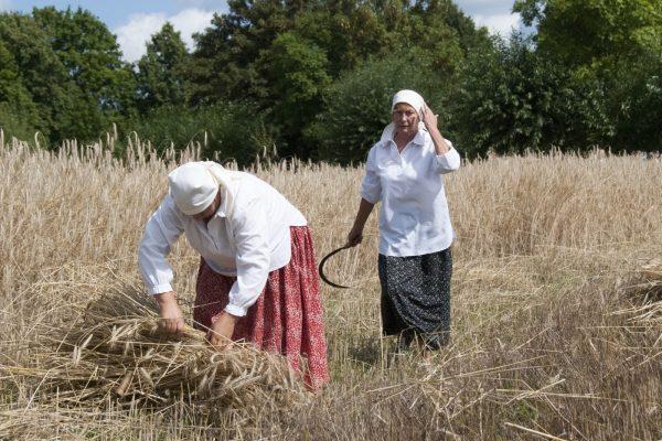 dwie kobiety wiążące snopy na polu