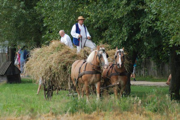mężczyźni siedzący na wozie pełnym słomy. Wóz ciągną dwa konie