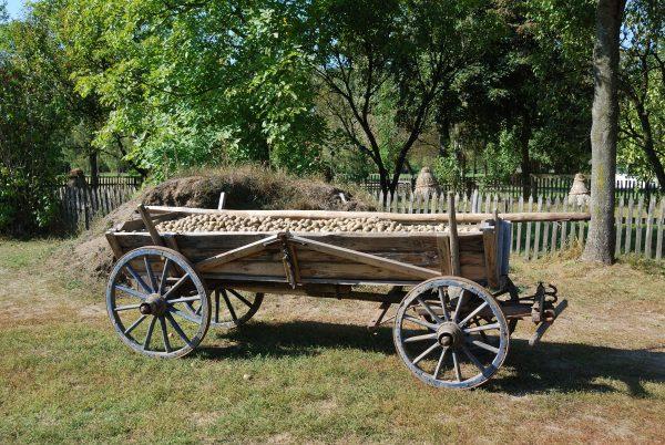 wóz z ziemniakami na podwórzu zagrody chłopskiej